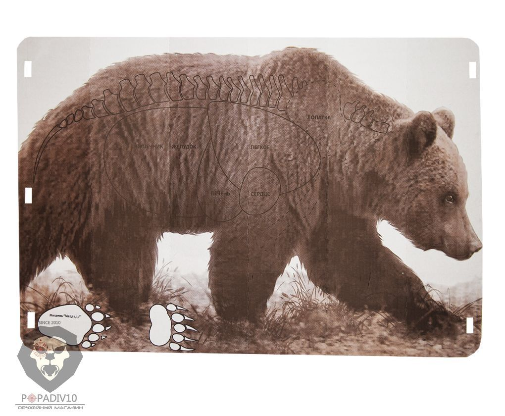 Мишень Медведь